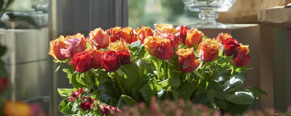 Die ersten eigenen Rosen sind da!
