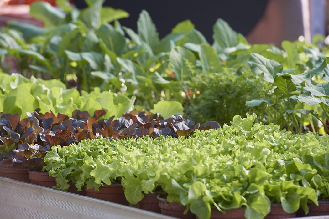 Salat-