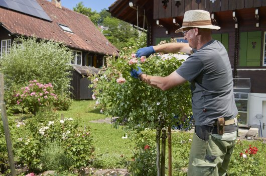 Gartenpflege: Wie Ihr Garten erblüht