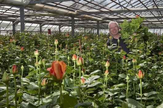 Rosen aus Hinwil